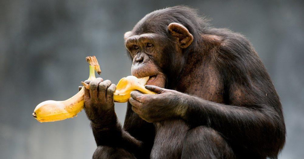 Paradigma de los monos y el sector inmobiliario